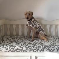 Dog coat and kitchen seating using Inigo Slate Grey crewel