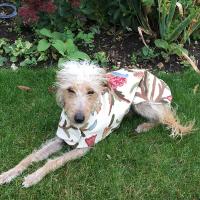 Dog coat made from Jacobean crewel